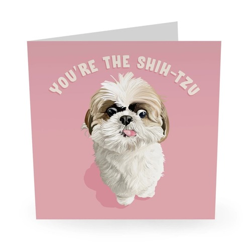 YOU'RE THE SHIH-TZU