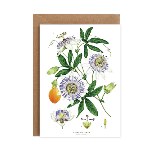 Passion Flower - White